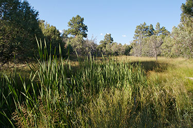 Wetland areas provide a haven for herons, geese ducks, osprey and many others