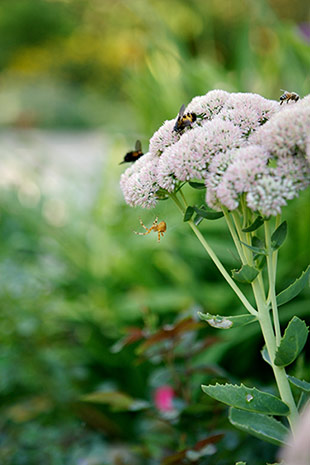 An ecological microcosm in the garden